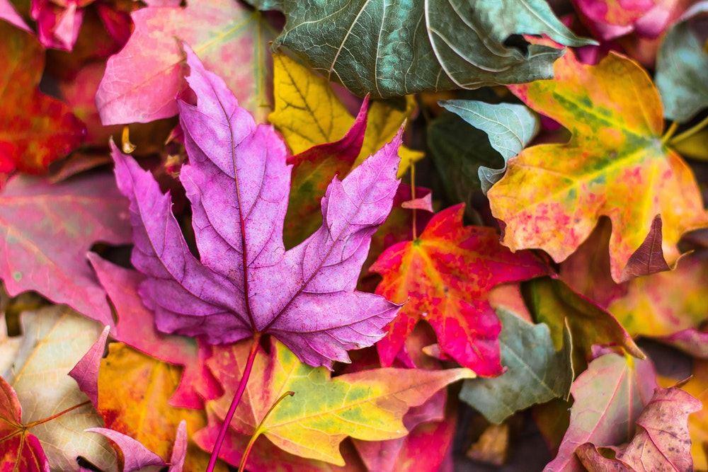 Bulk, Brush, Leaves, & Metal Collection | Stafford Township, NJ